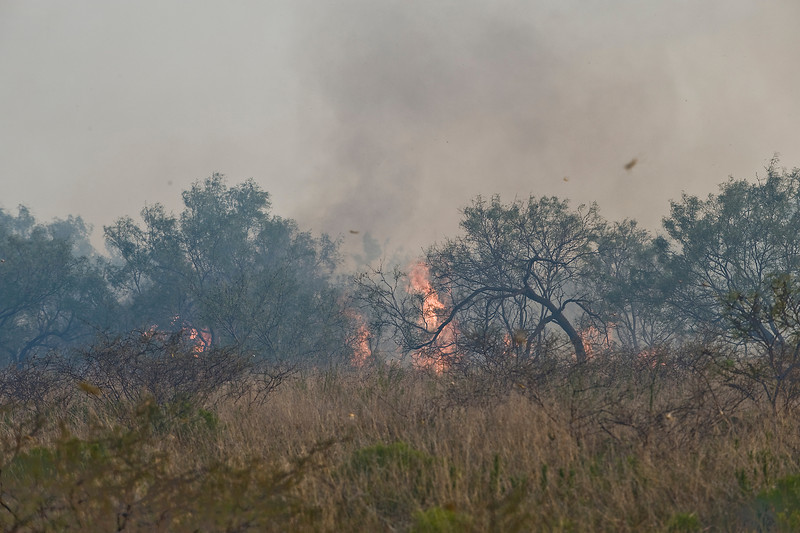 Fire coming through the brush.