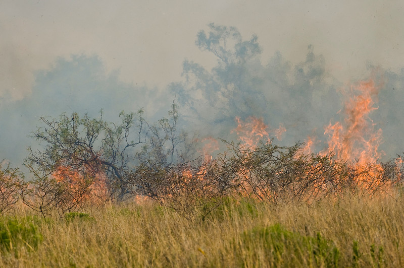 Low shrubs and tall grass fuel the flames.
