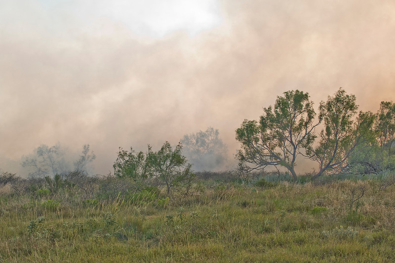 In spite of the green conditions the fire swept on.