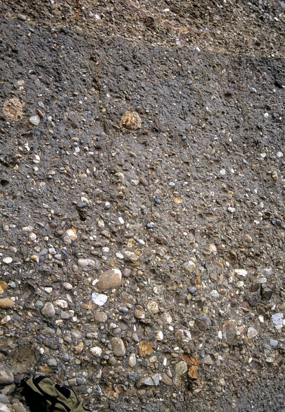 Normal grading in a muddy conglomerate bed
