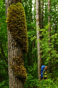 Moss, Chilkoot Trail