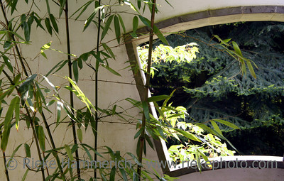 Window and bamboo in a chinese garden