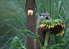 Groundhog and sunflower 0710-7