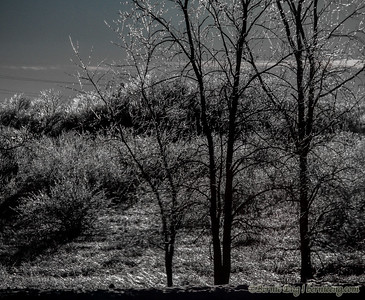 Trees and bushes sparkle with ice along M-47 near Salzburg.