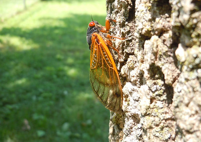I turned this photo 90 degrees to the right and cropped it tight once.  It looked like a cicada in a barren wasteland.