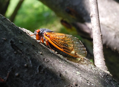 Cicada profiling for a really nice lighting effect.