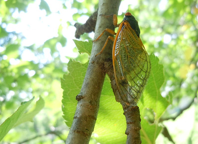 Amazing how the green leaf canopy mutes the colors of the wings.
