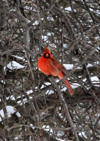 2014 Clarklake Winter Cardinals