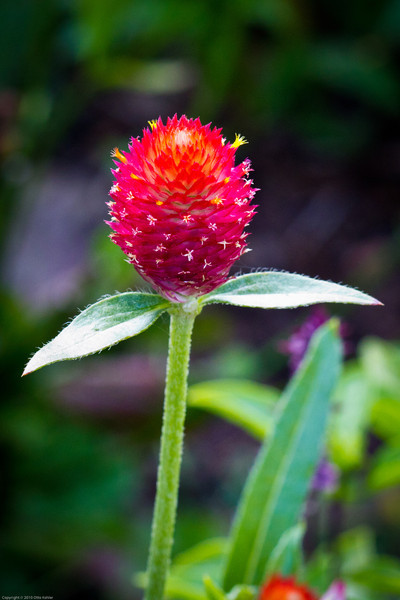 Clemson Botanical Gardens 7_2_11