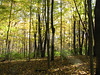 10-21-06 Clifton Gorge SNP 08 trees on trail