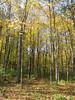 10-21-06 Clifton Gorge SNP 10 trees