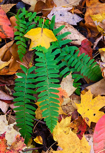 Fallen leaves around a fern.