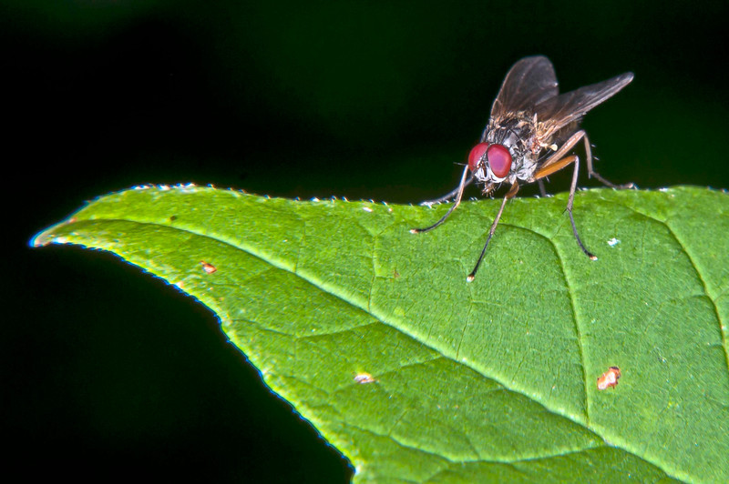 Small fly, 9-9-2011