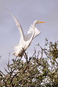 Egret, St. Simons Island, Georgia
