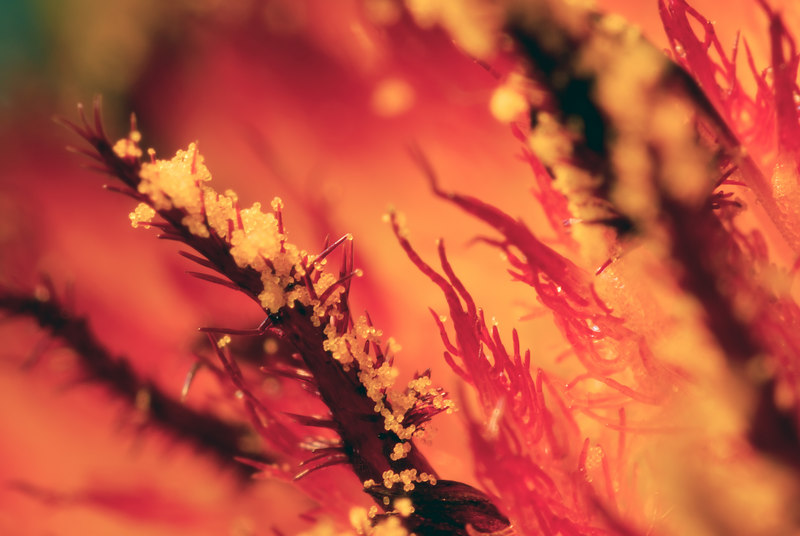 Extreme closeup of a Black-Eyed Susan flower.