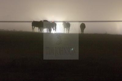 Fog & Horses