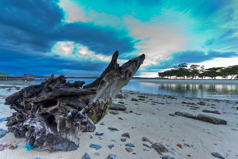 Changi Beach Driftwood