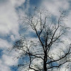 Silhoutted Tree and Blue Sky & White Clouds