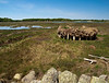 A staddle in a salt marsh in Rye.  These were constructions made of posts to keep the harvested hay above the tide until it could be moved.