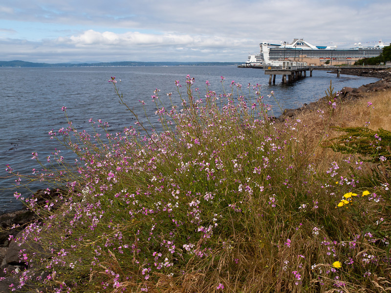 The Upper edge of the Seattle waterfront, this rocky view runs right to another cruise ship pier.