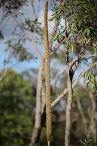 Noosa National Park, Monday 2 November 2009
