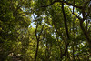 """Looking Up - Burleigh Heads National Park, Gold Coast - Flowers and Plants; 16 January 2015. Photos by Des Thureson - <a href=""""http://disci.smugmug.com"""">http://disci.smugmug.com</a>."""