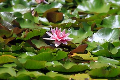 Banksias, Birds & Nature - Bribie Island, Sunshine Coast, Queensland; 3 March 2011. Photos by Des Thureson