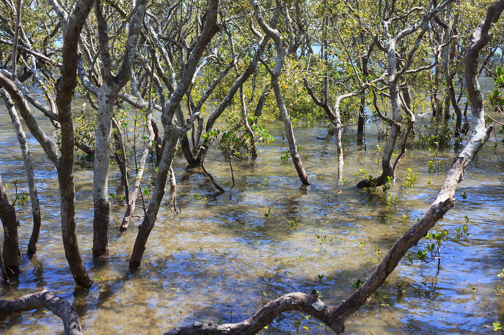 "Boondall Wetlands Reserve - Nudgee Beach Aspect; Wednesday 16 November 2016. Photos by Des Thureson - <a href=""http://disci.smugmug.com"">http://disci.smugmug.com</a>"