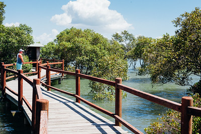 "VSCO Film Preset - ""C - Kodak Gold 100 Vibrant"" - Boondall Wetlands Reserve - Nudgee Beach Aspect; Wednesday 16 November 2016. Photos by Des Thureson - http://disci.smugmug.com"