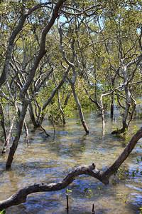 Boondall Wetlands Reserve - Nudgee Beach Aspect; Wednesday 16 November 2016. Photos by Des Thureson - http://disci.smugmug.com
