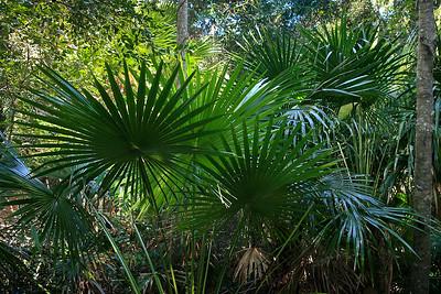 Burleigh Heads National Park, Gold Coast, Queensland, Australia; 23 July 2009. Photos by Des Thureson.