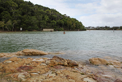 Tallebudgera Creek - Burleigh Heads National Park, Gold Coast - Flowers and Plants; 29 December 2015. Photos by Des Thureson - http://disci.smugmug.com.