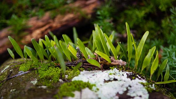 Burleigh Head National Park - Plants, Lichens & Surf