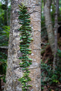 Burleigh Heads National Park, Gold Coast - Flowers and Plants; 29 December 2015. Photos by Des Thureson - http://disci.smugmug.com.
