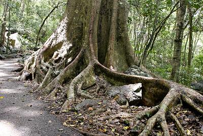 Burleigh & Burleigh Heads National Park, Gold Coast, Queensland, Australia; 12 November 2008. Photos by Des Thureson - http://disci.smugmug.com