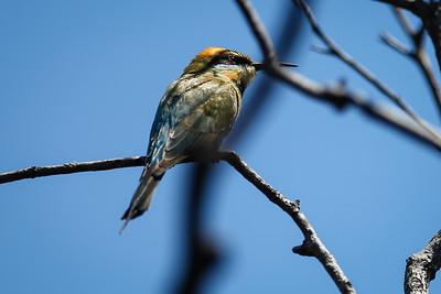 Kathleen McArthur (Currimundi Lake) Conservation Park: Birds & Flowers