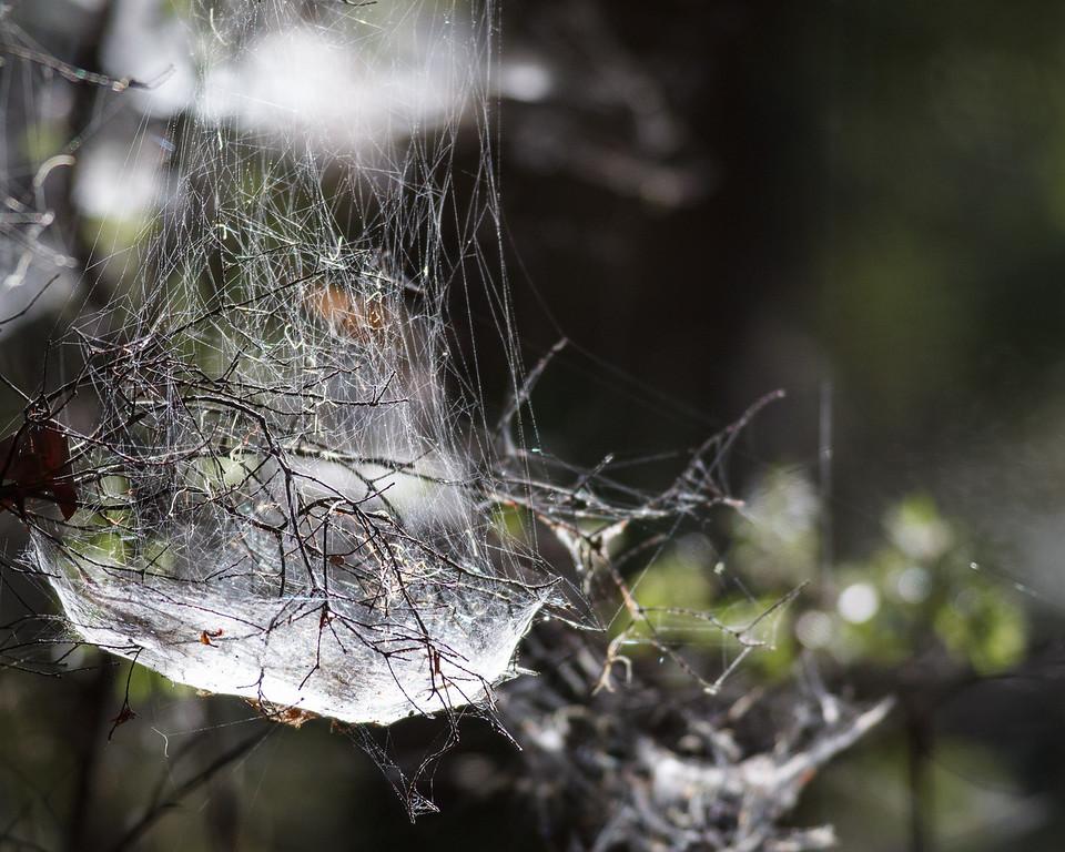 """Noosa National Park, Noosa Heads, Sunshine Coast, Queensland, Australia. Friday 26 February 2016. Photos by Des Thureson - <a href=""""http://disci.smugmug.com"""">http://disci.smugmug.com</a>."""