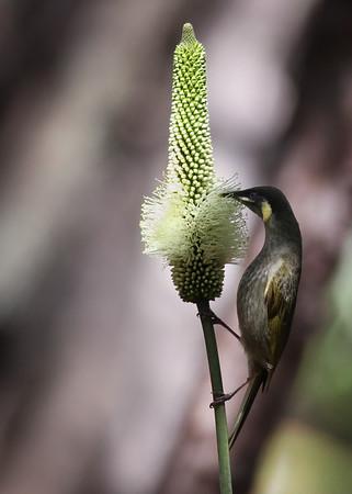 Summer & Winter - Noosa National Park 2012-2013