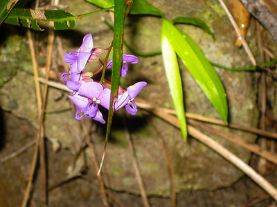 Flowers, Trees & Landscapes - Noosa National Park. Point and Shoot Camera pics.