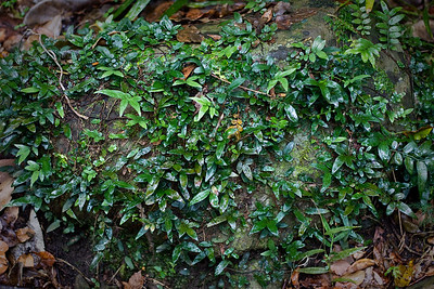 Plants, Lichens, Birds & Dragons - Burleigh Heads National Park, 31 December 2011, Gold Coast, Queensland, Australia. Photos by Des Thureson: http://disci.smugmug.com