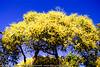 "(Extra Processing): Noosa National Park, Sunshine Coast, Queensland, Australia; 13 July 2010 - LR2 Preset: ""Matt's Warm & Fuzzy Look""."