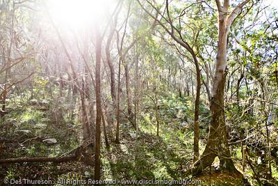 """Super-Nova"" - More 'open' woodland on the eastern side/half of Noosa National Park, Sunshine Coast, Queensland, Australia; 13 July 2010."