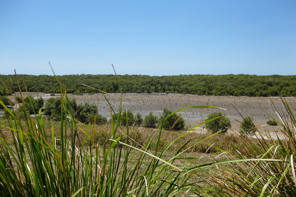 Migratory Shorebird Roosting Site - Wynnum Mangrove Boardwalk & Wynnum North Reserve; Wynnum North, Brisbane, Queensland, Australia; 17 October 2012. Photos by Des Thureson