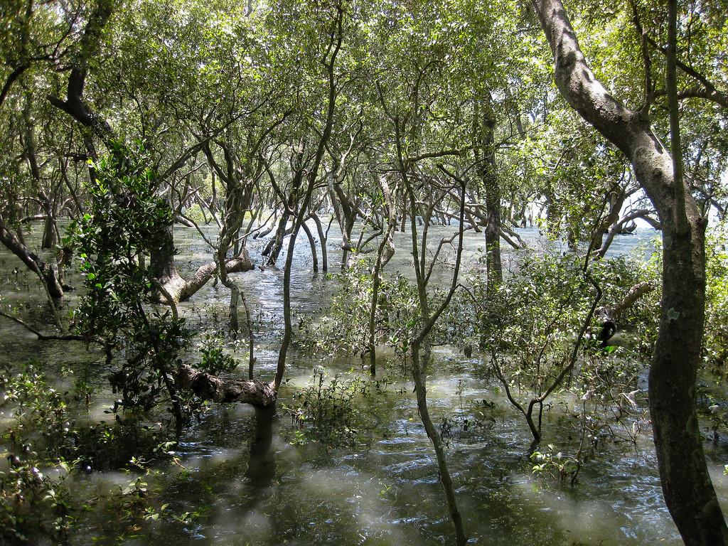 Wynnum Mangrove Boardwalk & Wynnum North Reserve; Wynnum North, Brisbane, Queensland, Australia; 17 October 2012. Photos by Des Thureson