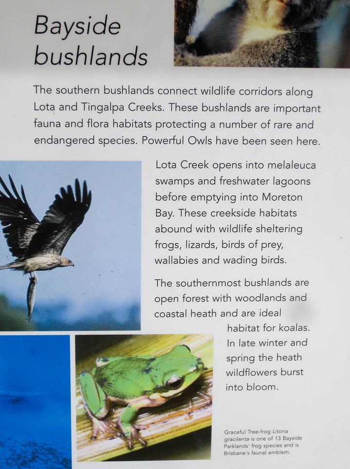 Bayside Bushlands - Information - Wynnum Mangrove Boardwalk & Wynnum North Reserve; Wynnum North, Brisbane, Queensland, Australia; 17 October 2012. Photos by Des Thureson