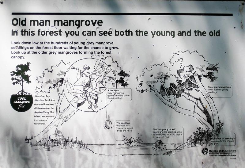 Mangrove Information - Wynnum Mangrove Boardwalk & Wynnum North Reserve; Wynnum North, Brisbane, Queensland, Australia; 17 October 2012. Photos by Des Thureson