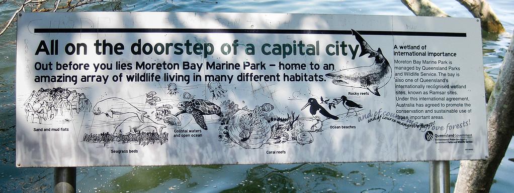 Moreton Bay Marine Park Information - Wynnum Mangrove Boardwalk & Wynnum North Reserve; Wynnum North, Brisbane, Queensland, Australia; 17 October 2012. Photos by Des Thureson