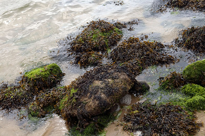 286 Scenic Intertidal , Rocky ShoreMAT_8850
