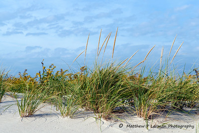 363 Plant Dune American Beach Grass Oct232012_0310