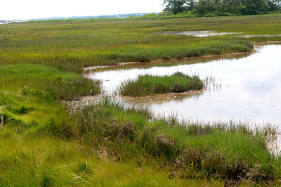 270 Salt Marsh MAT_9122